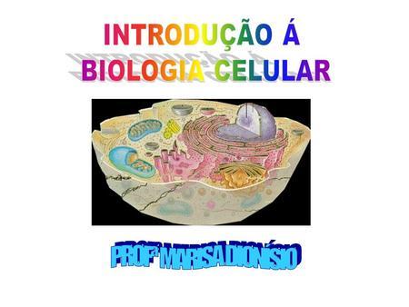 NÍVEIS DE ORGANIZAÇÃO DOS SERES VIVOS ÁREAS DA BIOLOGIA CITOQUÍMICA OU BIOQUÍMICA: estudo das moléculas. CITOLOGIA: estudo das células e estruturas celulares.