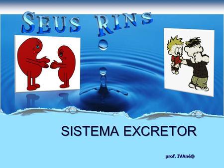 Prof. SISTEMA EXCRETOR. Os rins retiram do sangue as substâncias nocivas que se encontram no plasma; Ureia; Ácido úrico.