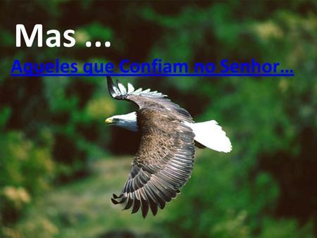 Aqueles que Confiam no Senhor… Mas... Renovarão suas Forças, Receberão asas como Águias, Voarão e correrão sem se cansar … (Isaías 40,31)