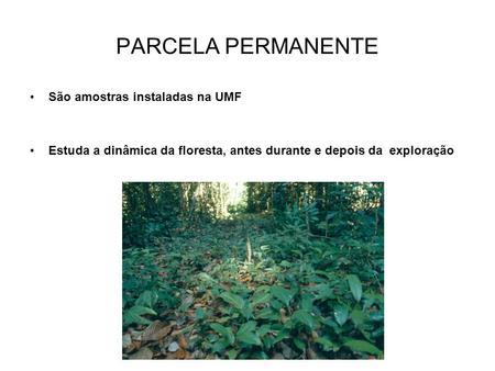 PARCELA PERMANENTE São amostras instaladas na UMF Estuda a dinâmica da floresta, antes durante e depois da exploração.