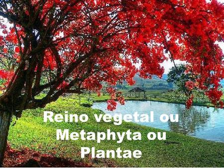 Reino vegetal ou Metaphyta ou Plantae. Quais são os representantes do reino vegetal? Pág.: 60!!