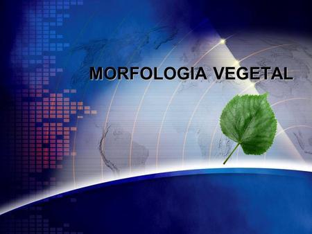 MORFOLOGIA VEGETAL.