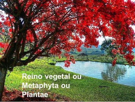 Reino vegetal ou Metaphyta ou Plantae.