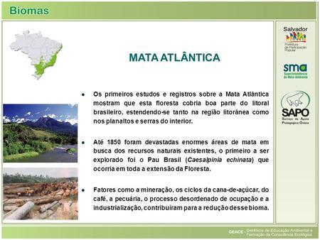 Os primeiros estudos e registros sobre a Mata Atlântica mostram que esta floresta cobria boa parte do litoral brasileiro, estendendo-se tanto na região.